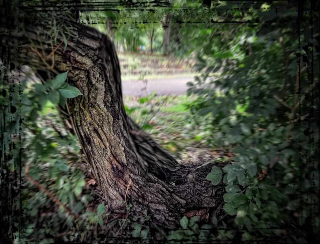 DSC_1298 framed